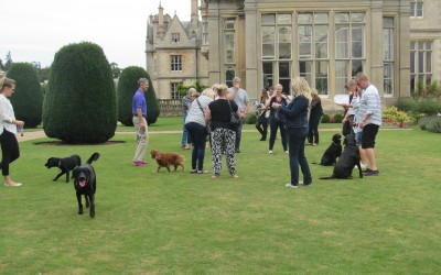 Scrufts & Owners on the Lawn at Stoke Rochford Hall Grantham